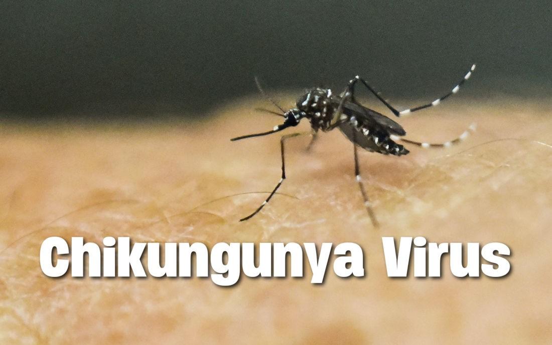 Вирус Чикунгунья атакует Пхукет