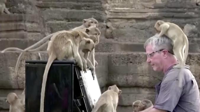 В Таиланде пианист устроил концерт для обезьян