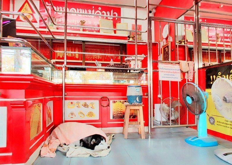 В Таиланде сторожевой пес проспал «ограбление» магазина своего хозяина