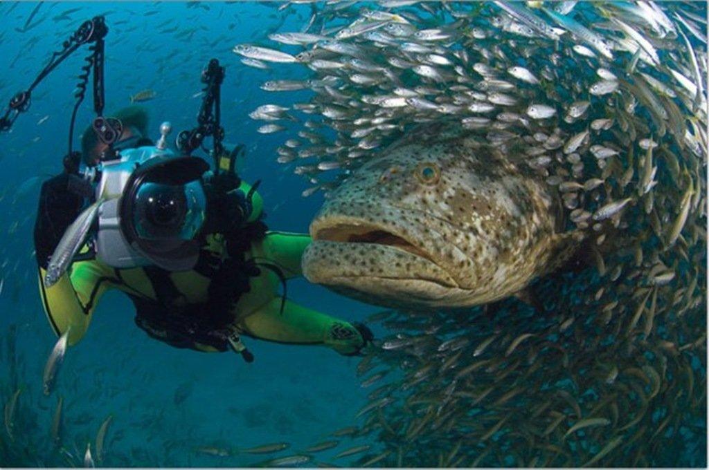 Рыбы Тайланда: опасные и удивительные