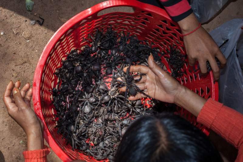 Профессия не для слабонервных: охотник на тарантулов в Камбодже