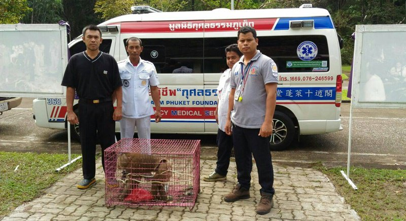 Дикую макаку поймали в одном из поселков Паклока
