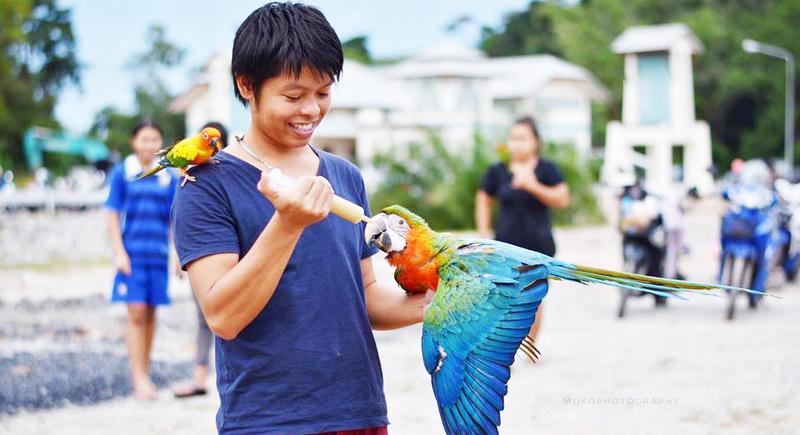В небе над озером: Клуб заводчиков попугаев на Пхукете