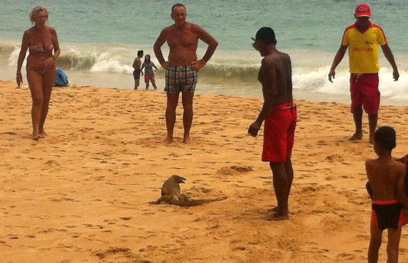 С пляжа Най-Харн выгнали крупного варана
