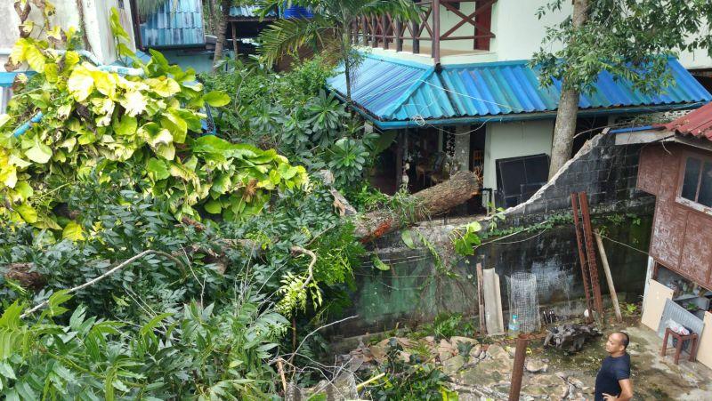 Дерево, росшее на территории гестхауса Shanti Lodge, не выдержало сильного ветра и рухнуло во второй половине дня 24 мая