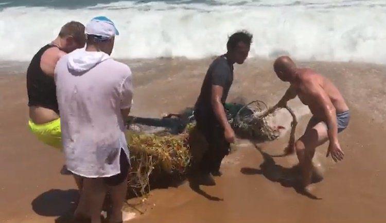 Спасенной из сетей черепахе придется ампутировать плавник.  Сотрудники Центра морской биологии на Пхукете (РМВС) пытаются помочь морской черепахе, которую нашли на пляже Най-Янг