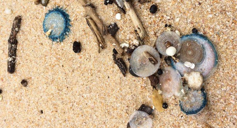 Медузы на пляже в Патонге, на Банг-Тао, Сурине и других пляжах западного побережья. Их появление – неизбежное следствие начавшихся муссонов
