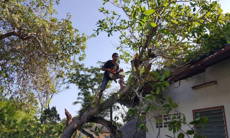 Полувековое дерево не выдержало сильного ветра и рухнуло на жилой дом в Чалонге во вторник, 19 декабря