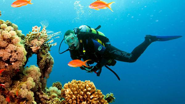 Тайские ученые решили спасти кораллы в бухте Майя Бэй с помощью суперклея