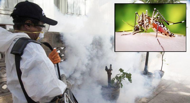 Что такое лихорадка денге и как от нее защититься