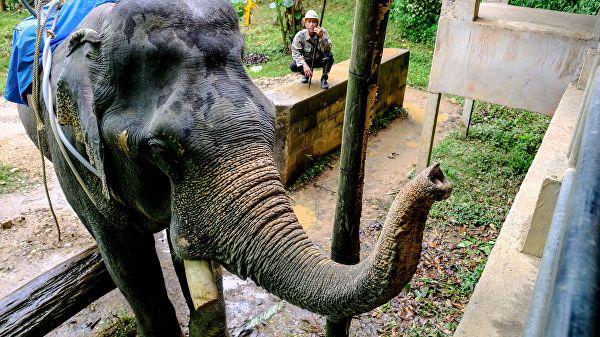 В Таиланде слон напал на двух туристов и погонщика