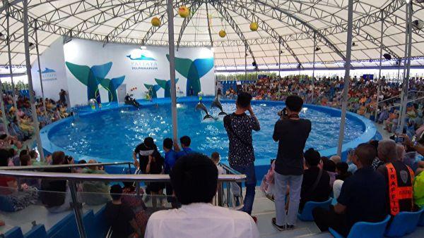 В Паттайе черноморские дельфины будут лечить детей с особенностями развития