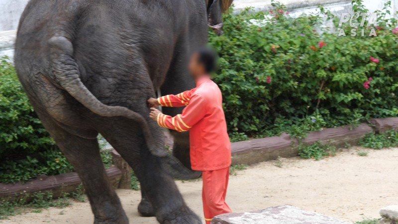 Тайский зоопарк обвинили в жестоком обращении с животными