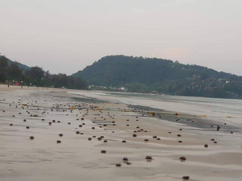 Сотни морских ежей на пляже в Патонге: специалисты ищут причину