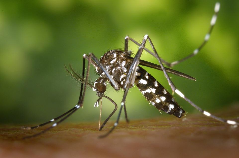 Двое израильтян заразились вирусом Зика в Таиланде