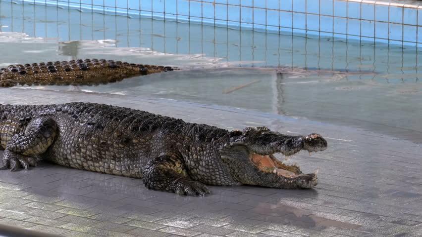 Паттайская ферма крокодилов