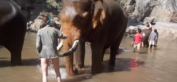 В Таиланде слон едва не убил надоедливую туристку