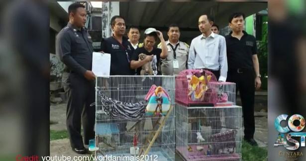 Red Bull heir alleged cop killer, free emergency care, Phuket rains    March 29