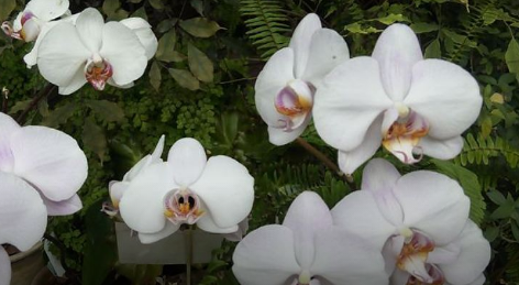У томичек отобрали 15 орхидей, привезенных из Таиланда