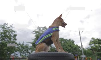 Улицы Таиланда будет охранять собачий патруль