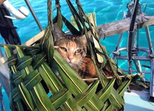 Пошаговая инструкция для путешественника с котиком
