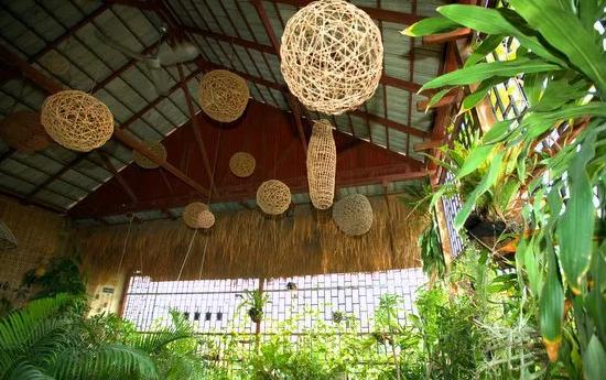 Любимые домашние растения в Камбодже