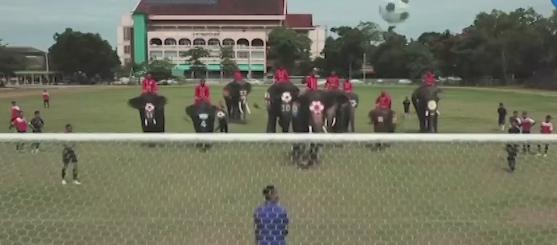 Игроки-гиганты: тайские подростки сыграли в футбол со слонами