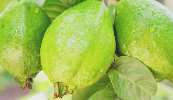 Фрукты Тайланда: полный обзор экзотических фруктов
