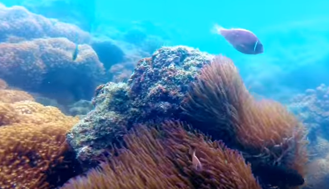 Snorkeling on Samui Coral Cove Beach (Freediving)