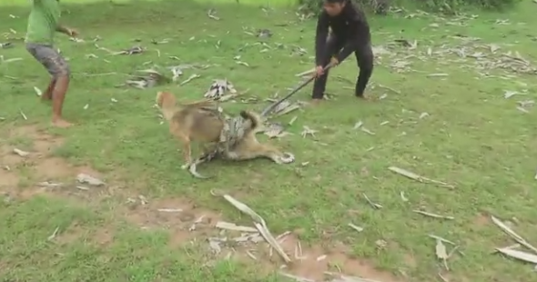 Дети отбили собаку уогромной анаконды