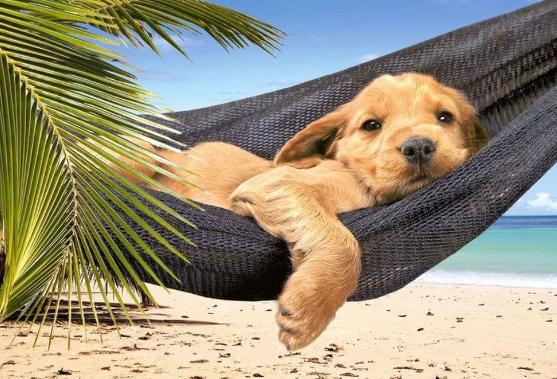 К 2027 году Таиланд будет захвачен бездомными котами и псами