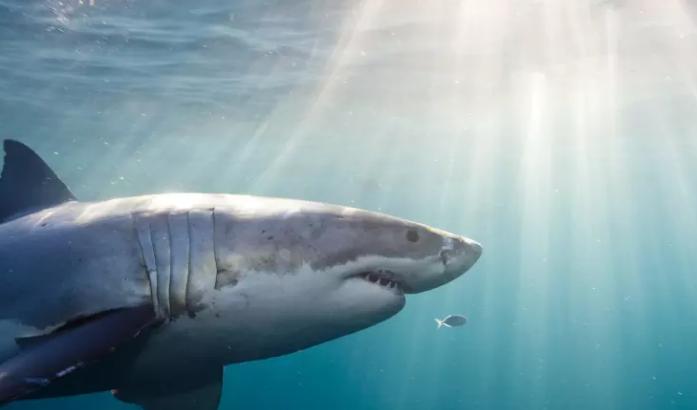 В водах залива Майя погиб детеныш акулы