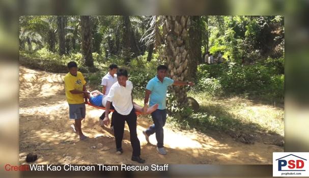 Elephant goes wild! Phuket wildfire! Bounded body found? || Phuket