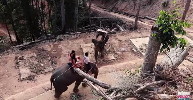 Экскурсия на Пхукете. Деревня слонов | Elephant Camp