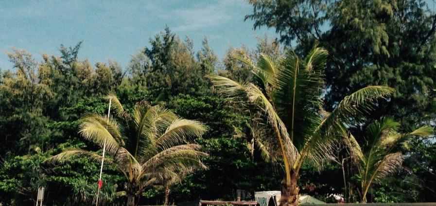 Туристка погасила долг в 800 тысяч ради поездки в Таиланд
