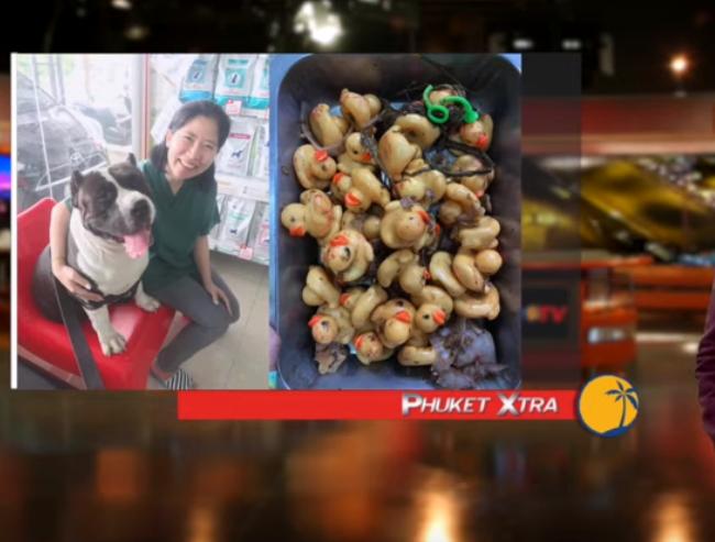 32 rubber ducks inside dog? Erawan bomb trial on docket? Lantern event cancelled! || Phuket
