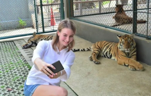 New Tiger Park backlash! Stepson charged over stepdad murder? || Phuket