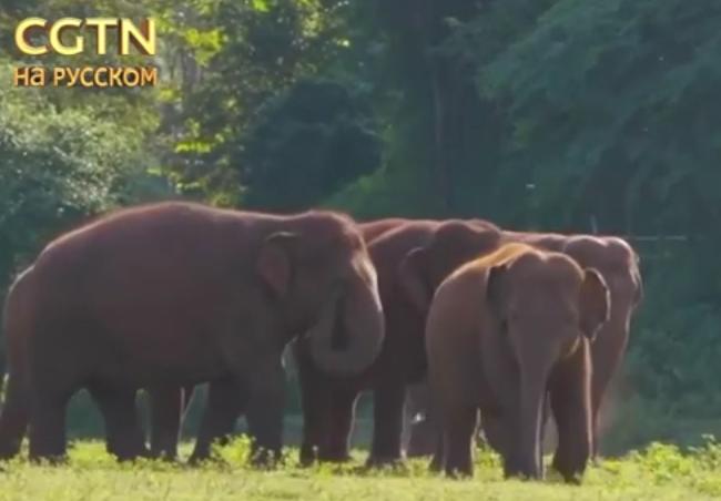 Слоны в Таиланде возвращаются на волю