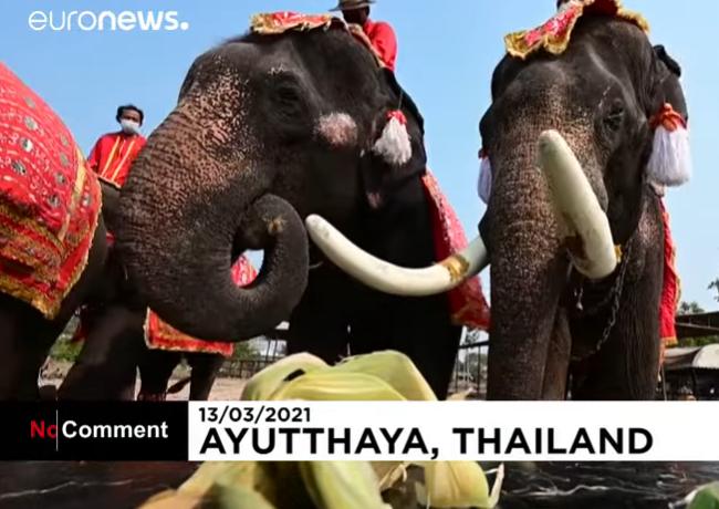 В Таиланде поздравили слонов