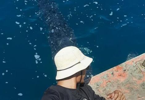 "Рыбака из Таиланда удивила ""дружелюбная"" китовая акула"