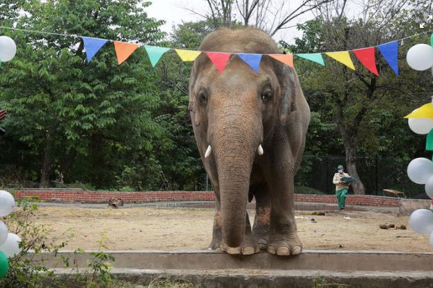 Слон атаковал статую, приняв ее за соперника