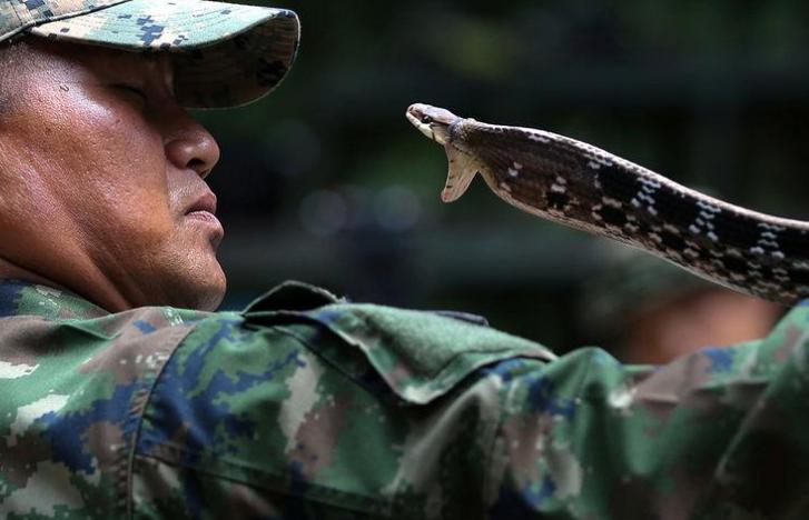 США и Таиланд планируют возобновить полномасштабные военные учения Cobra Gold