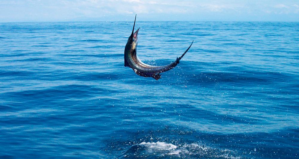 Департамент рыболовства запрещает промысел в Андаманском море