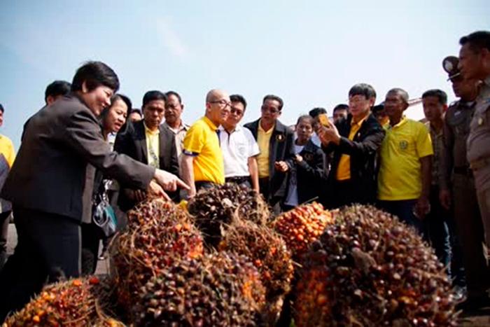 Пальмовое масло в качестве альтернативного топлива в Таиланде