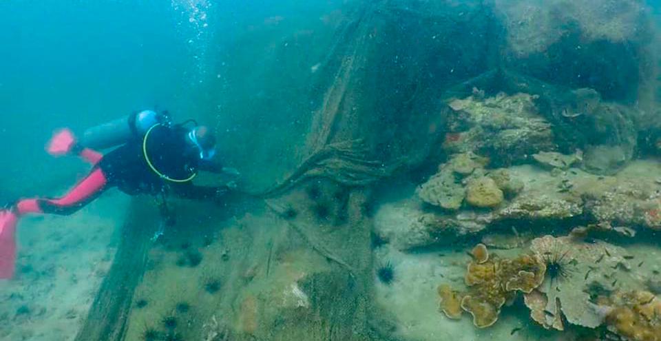 Спасательная операция для кораллового рифа в Паттайе