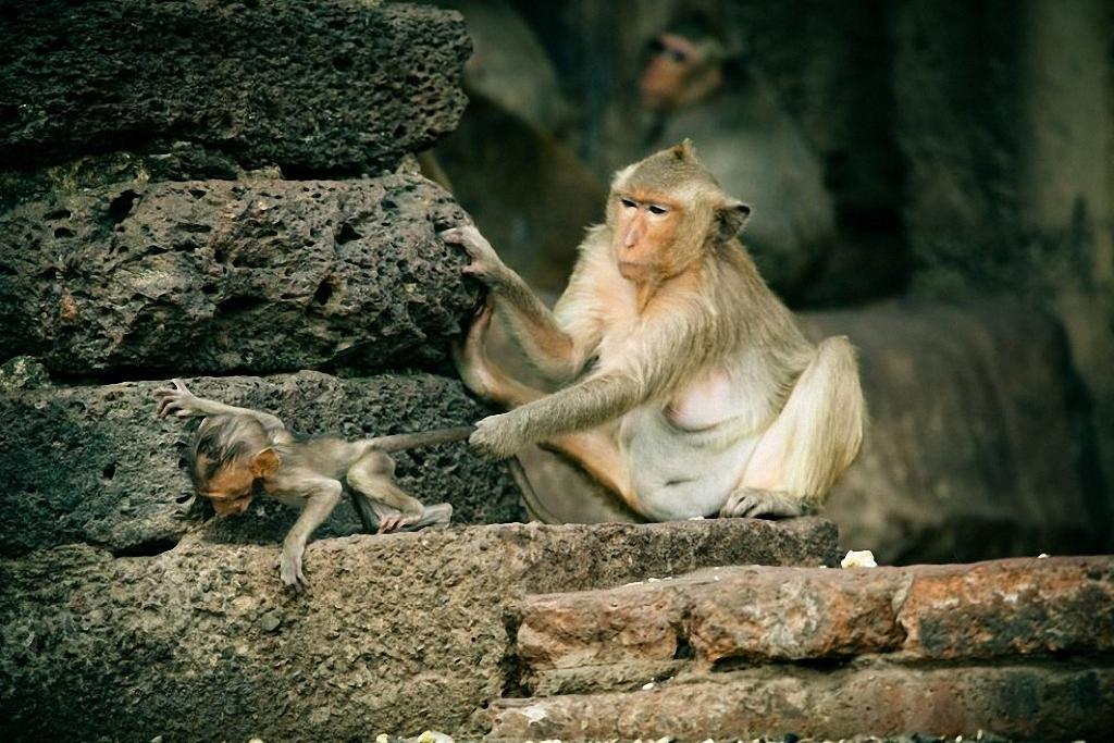 В Таиланде обезьяны оккупировали туристические достопримечательности