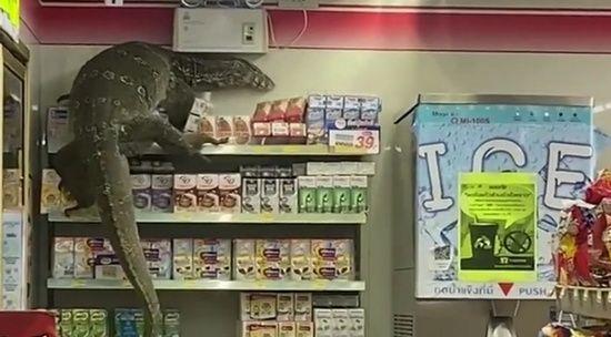 В Таиланде посетителей супермаркета распугал гигантский варан.