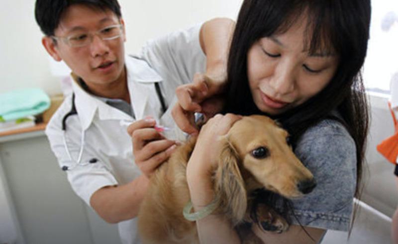 Таиланд планирует импортировать вакцину РФ от COVID-19 для животных