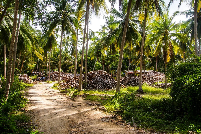 Самуи или Кокосовый остров