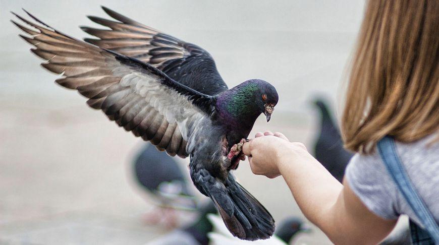 Власти Таиланда запретили подкармливать голубей